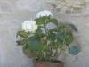 fiori particolare  stucco muri in pietra
