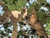 i gatti monelli Simba e Momo