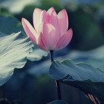 Semplicità bellezza e Qualità