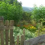 scorcio dall'orto sul giardino dei fiori